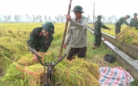 Ban chỉ huy quân sự Thành phố giúp dân gặt lúa tránh bão