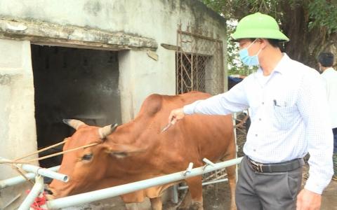 Thực hiện nghiêm các biện pháp phòng trừ sâu bệnh để bảo vệ cây trồng con vật nuôi