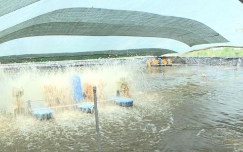 Đảm bảo môi trường sống cho thủy sản khi nắng nóng kéo dài