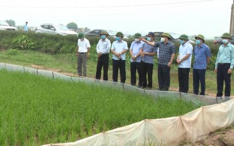 Phải từng bước nâng cao giá trị sản xuất lúa gạo