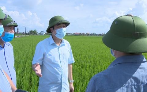 Các địa phương chủ động phòng trừ sâu bệnh, bảo vệ lúa mùa